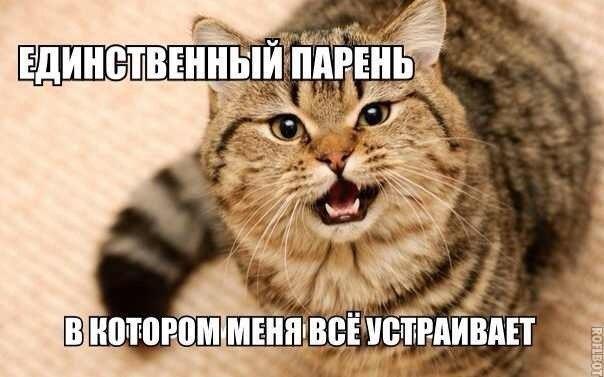 кот-мотиватор-серый