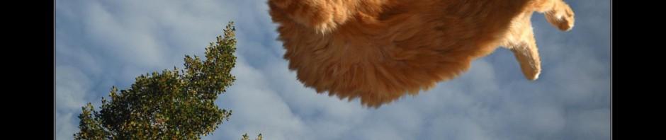 кот рыжий летун