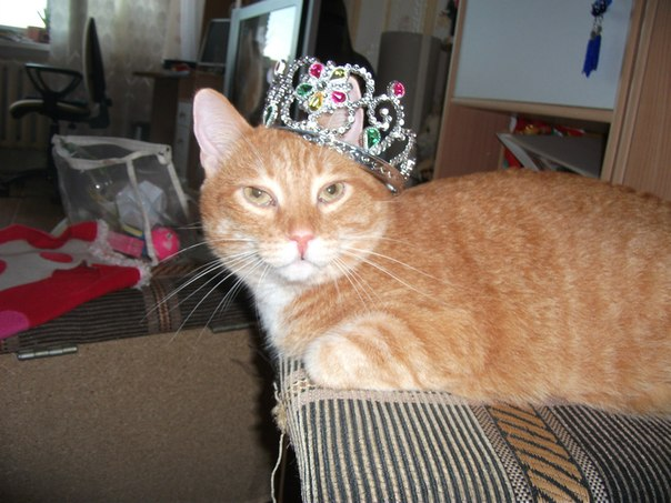кот рыжий с короной на голове