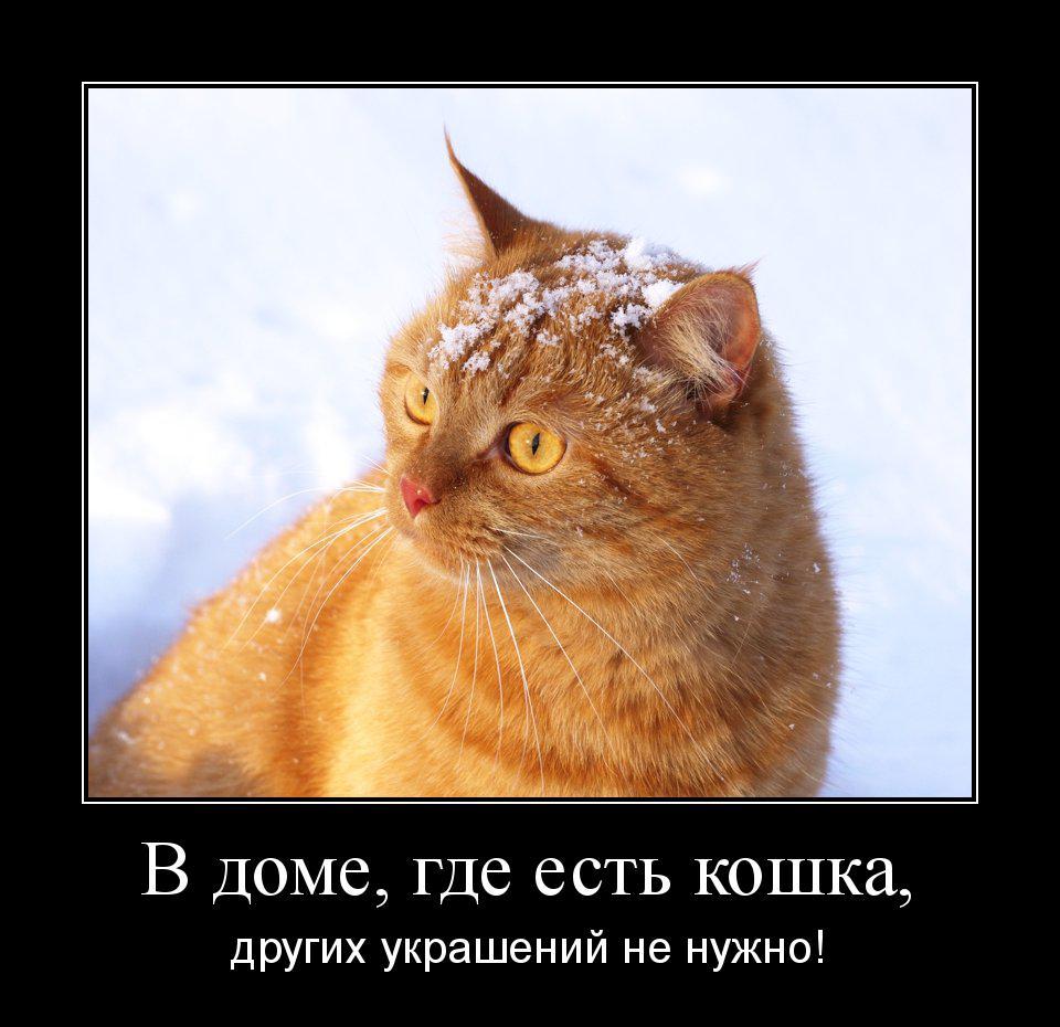 мотиватор-рыжая-кошка-красивая