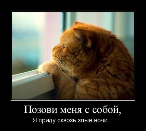 Почему у старой кошки слезятся глазки
