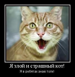 мотиватор-кот-шипит-рыжий