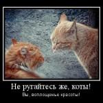 Почему коты дерутся?