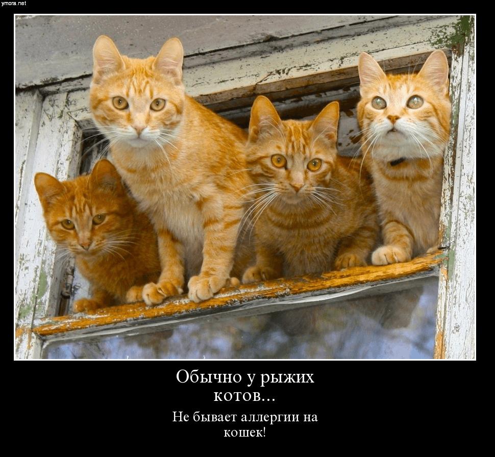 Какие самые древние коты?