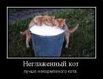 Самое любимое лакомство кота