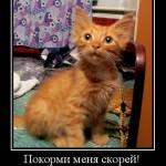Чем кормить котенка, чтобы он был толстый?