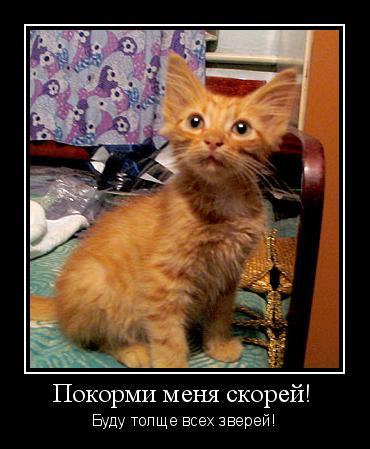 Чтобы кот был толстым-чем кормить