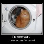 Причины ухудшения шерсти кота