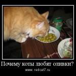 почему коты любят оливки