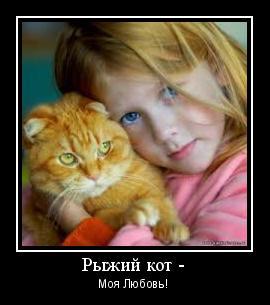 рыжий кот моя любовь