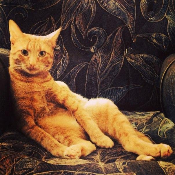 рыжий кот Затрудненное дыхание у кошек