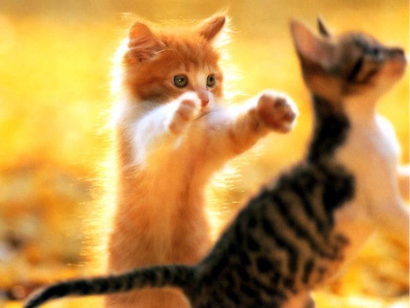 Сонник котенок рыжий.