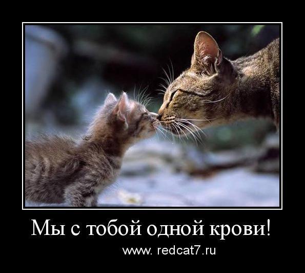 мотиватор коты