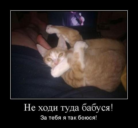 мотиватор рыжий котенок