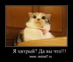 Почему коты хитрые?