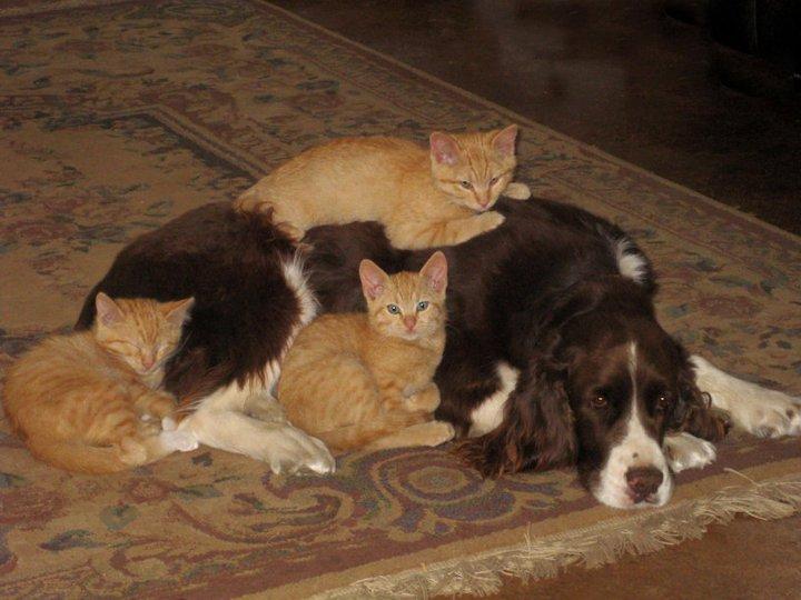 ДВИГАЕМСЯ ДАЛЬШЕ И ЧИТАЕМ ДРУГИЕ ИНТЕРЕСНЫЕ СТАТЬИ: Как примирить кошку с собакой? Как примирить кошку с собакой? Музыкальная кошка. Музыкальная кошка. Чем кошка отличается от собаки? Чем кошка отличается от собаки? Как толстый Рыжий от собак спасался. Как толстый Рыжий от собак спасался. Могут ли собака и кошка быть друзьями? Могут ли собака и кошка быть друзьями?