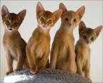 Рыжие кошки бывают?