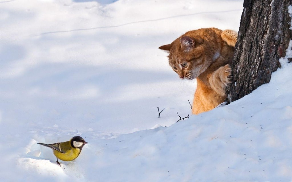 Рыжие кошки бывают? фотография рыжей кошки, рыжего кота и синичка зимой снег