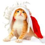 Смешной рыжий котенок.