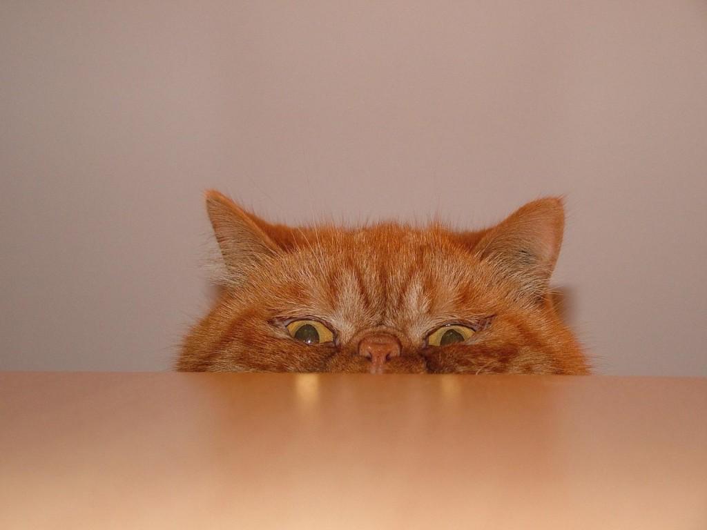 Почему кошку тошнит?