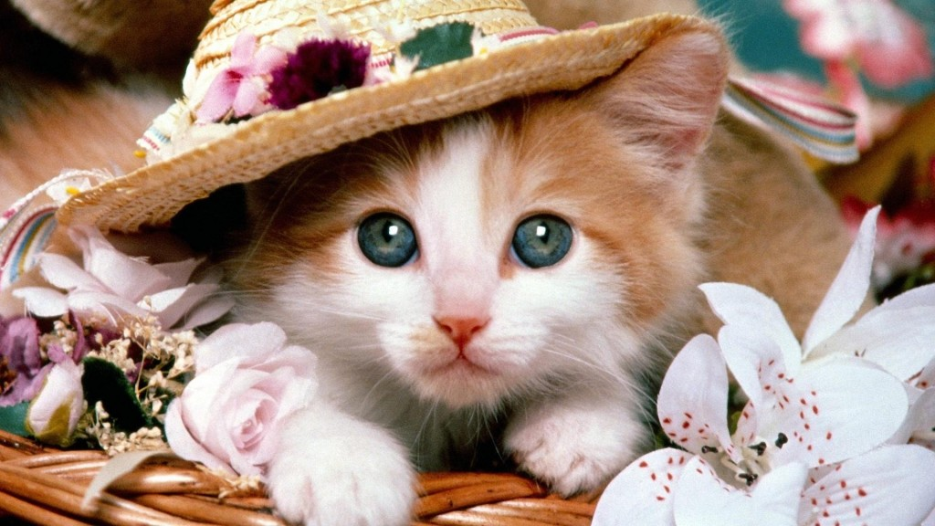 1 - Фотографии рыжих котов и не только