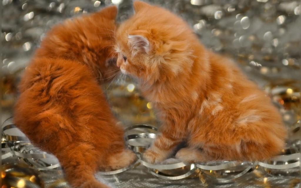 фотографии рыжих котов и котят, милые рыжие котята смотреть