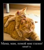 Как ухаживать за глазами котенка?