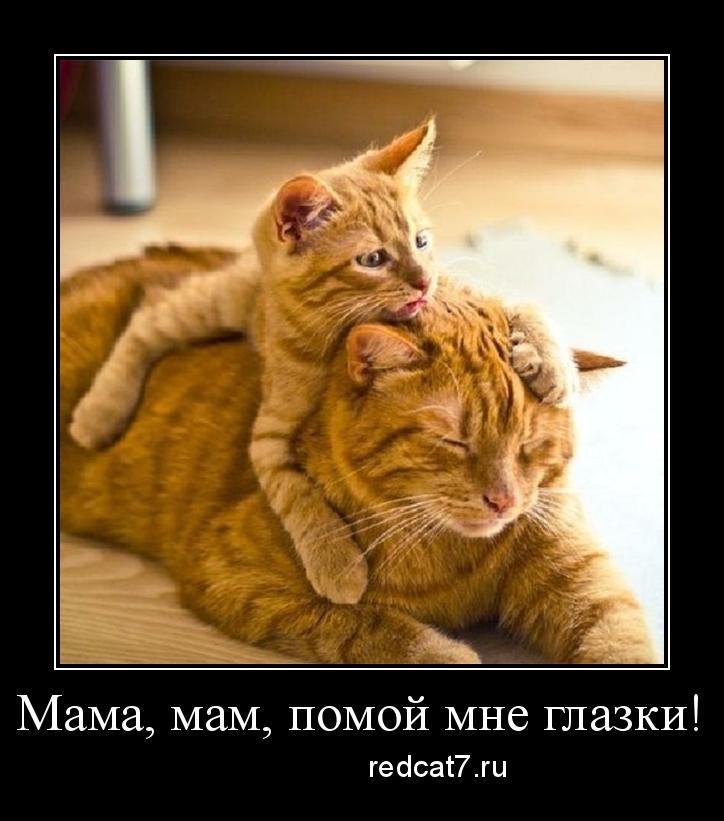 рыжий котенок и кошка рыжая