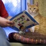 рыжий кот и букварь