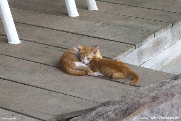Бездомный котенок и жестокосердие.