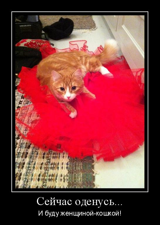 легенды о женщинах кошек
