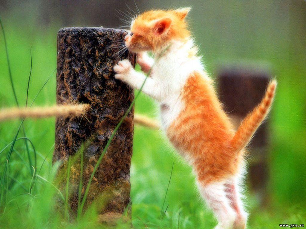 Animals_Cats__001794_1