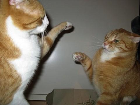 В г. Тольяти кот атаковал женщину