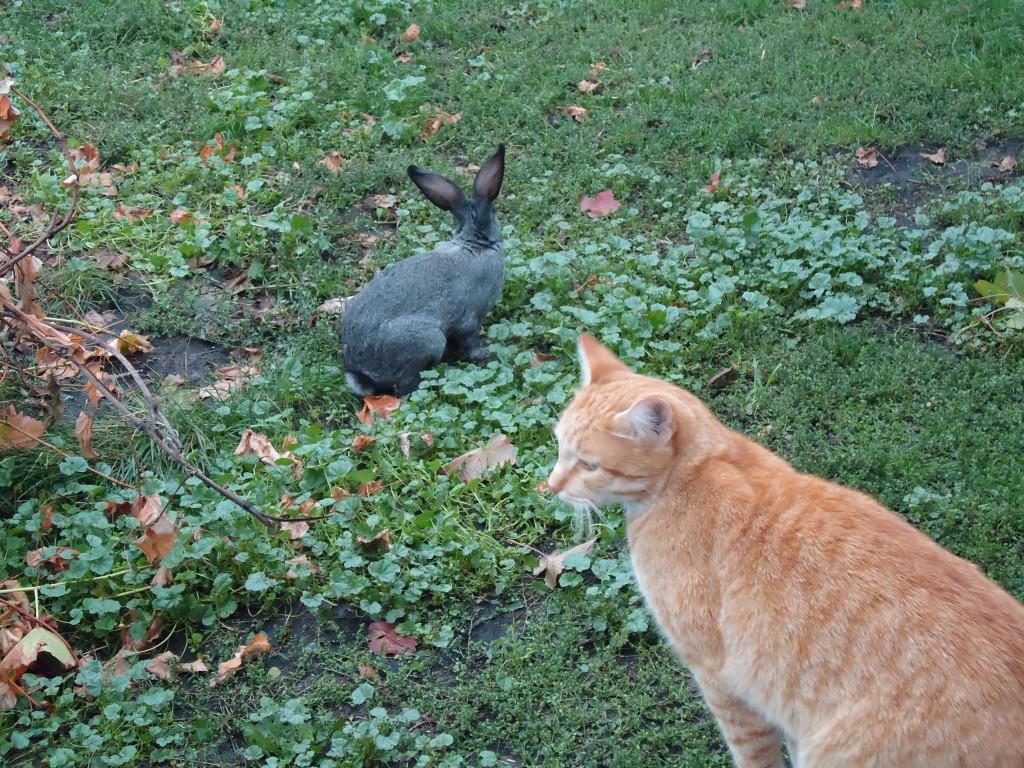 рыжий кот и кролик
