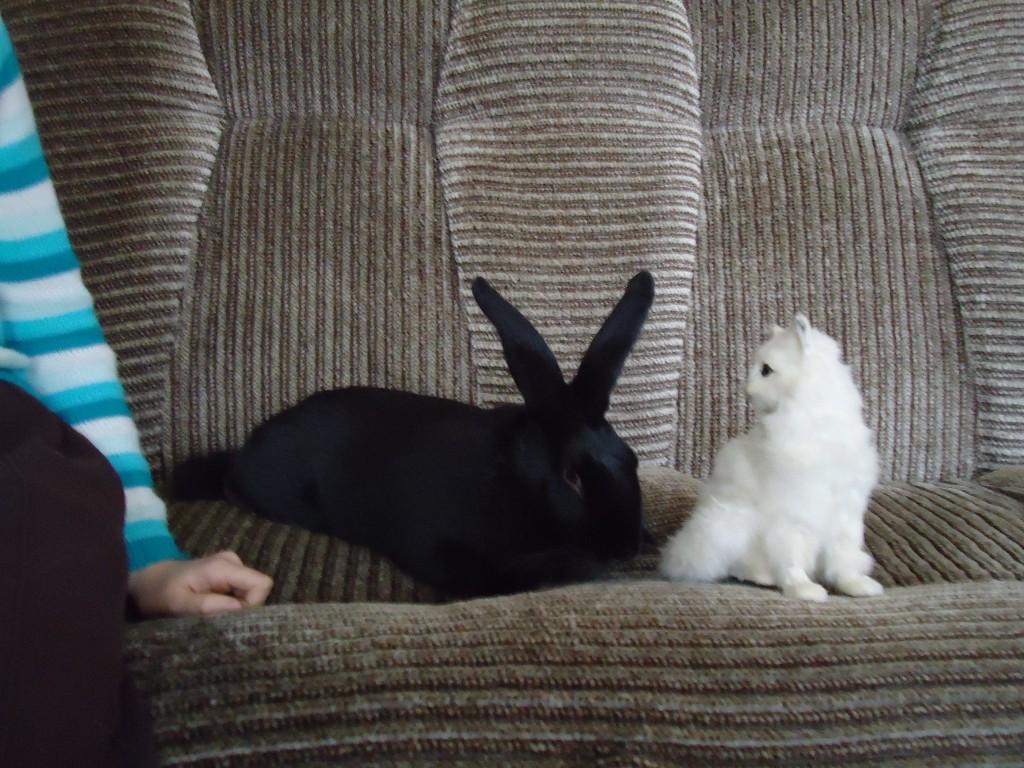 фотография черный кролик и белый кот на диване, Почему кошка лижет ноги?