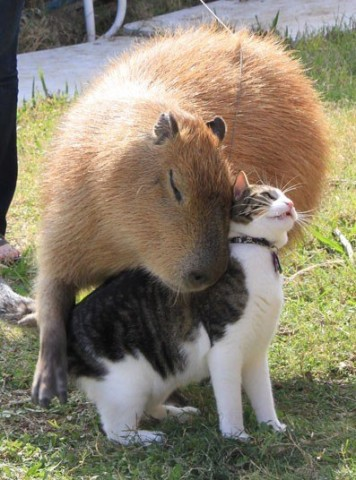 Кошка и новые знакомства.