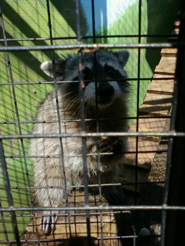 фотографии животных +из зоопарка