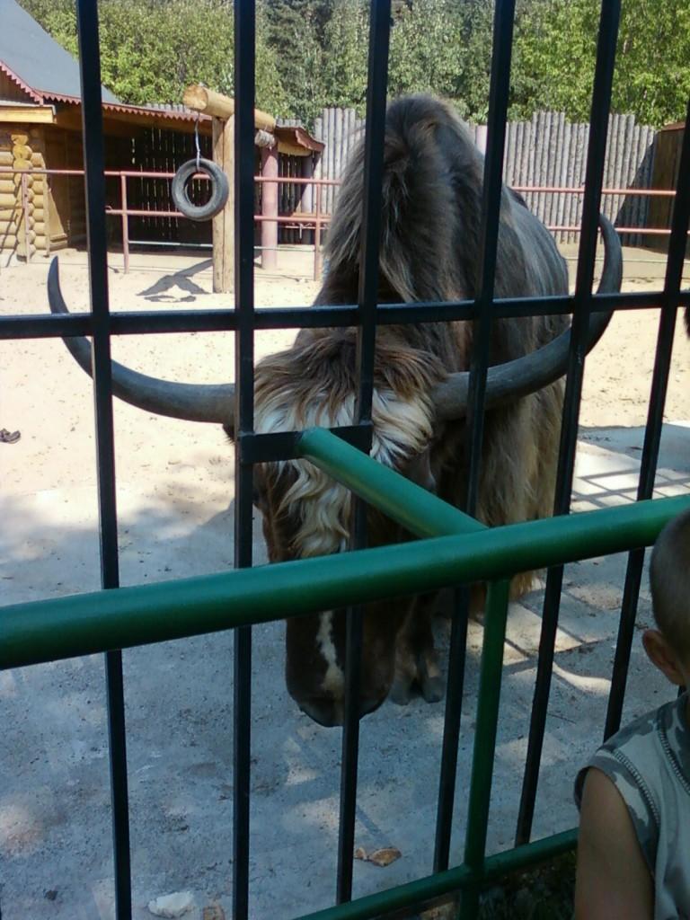 фотографии животных +из зоопарка бизон