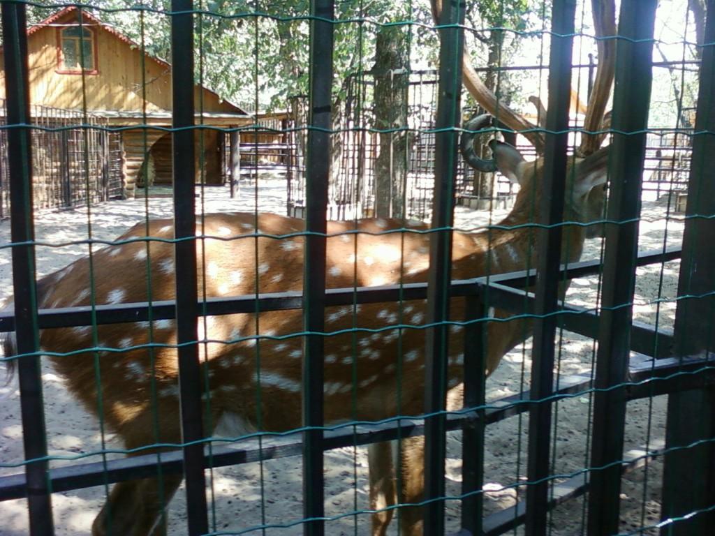 лань фотографии животных +из зоопарка