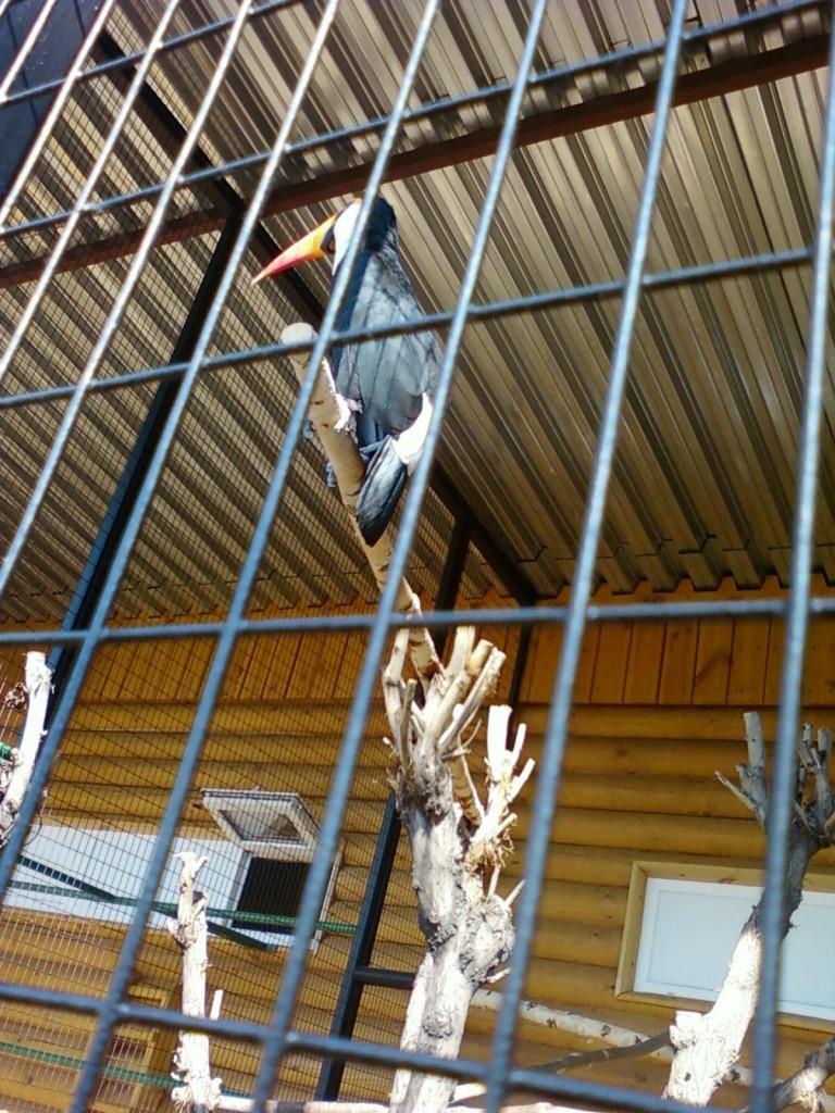 зоопарк +в москве фотографии