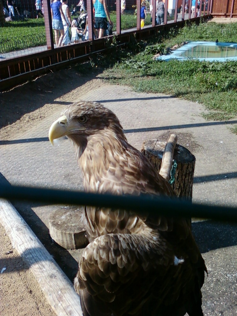орел фотографии животных +из зоопарка