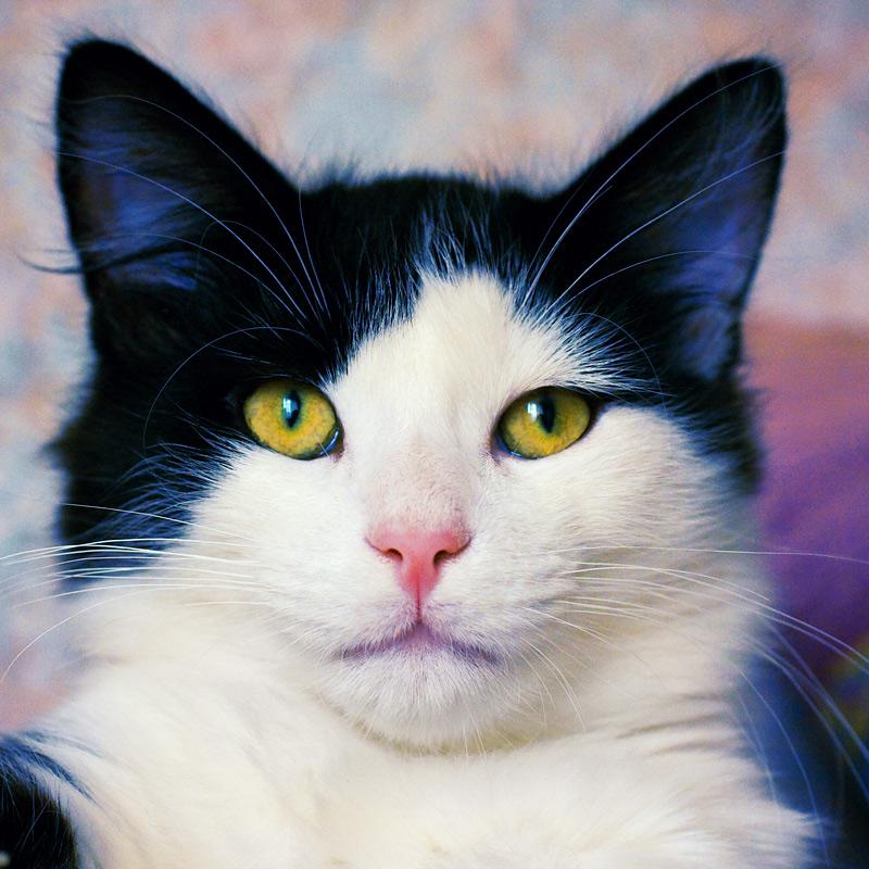 Фотографии рыжих котов и не только