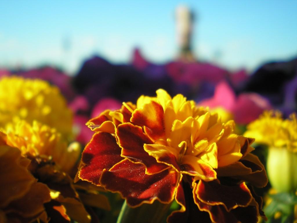 фотография цветок красивый