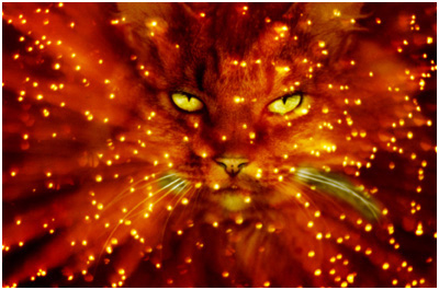 Почему кошка видит в темноте? В чем секрет?