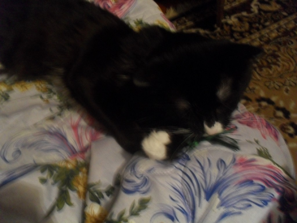 черный кот Томасик