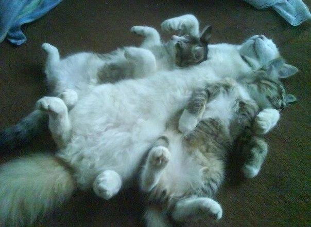 Почему котята все нравятся?
