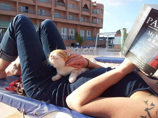 рыжий котенок и девушка