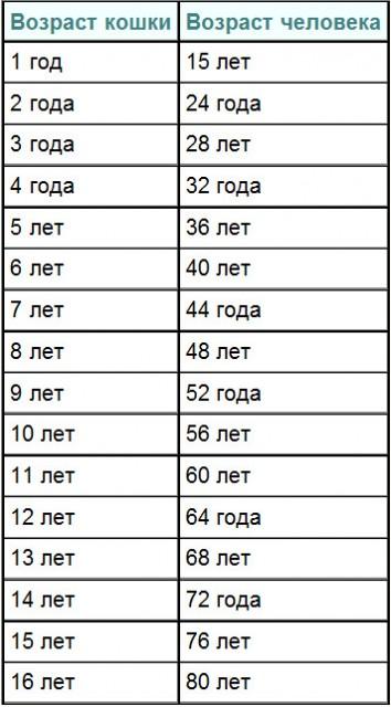 Таблица соответствия возраста кошки и человека