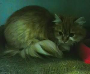 Почему кошка плохо ест? 7 причин потери аппетита.