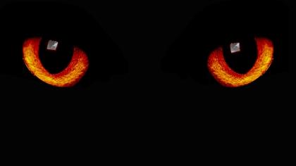 Почему кошка видит в темноте?